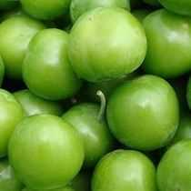 Yeşil Erik - 5 Adet
